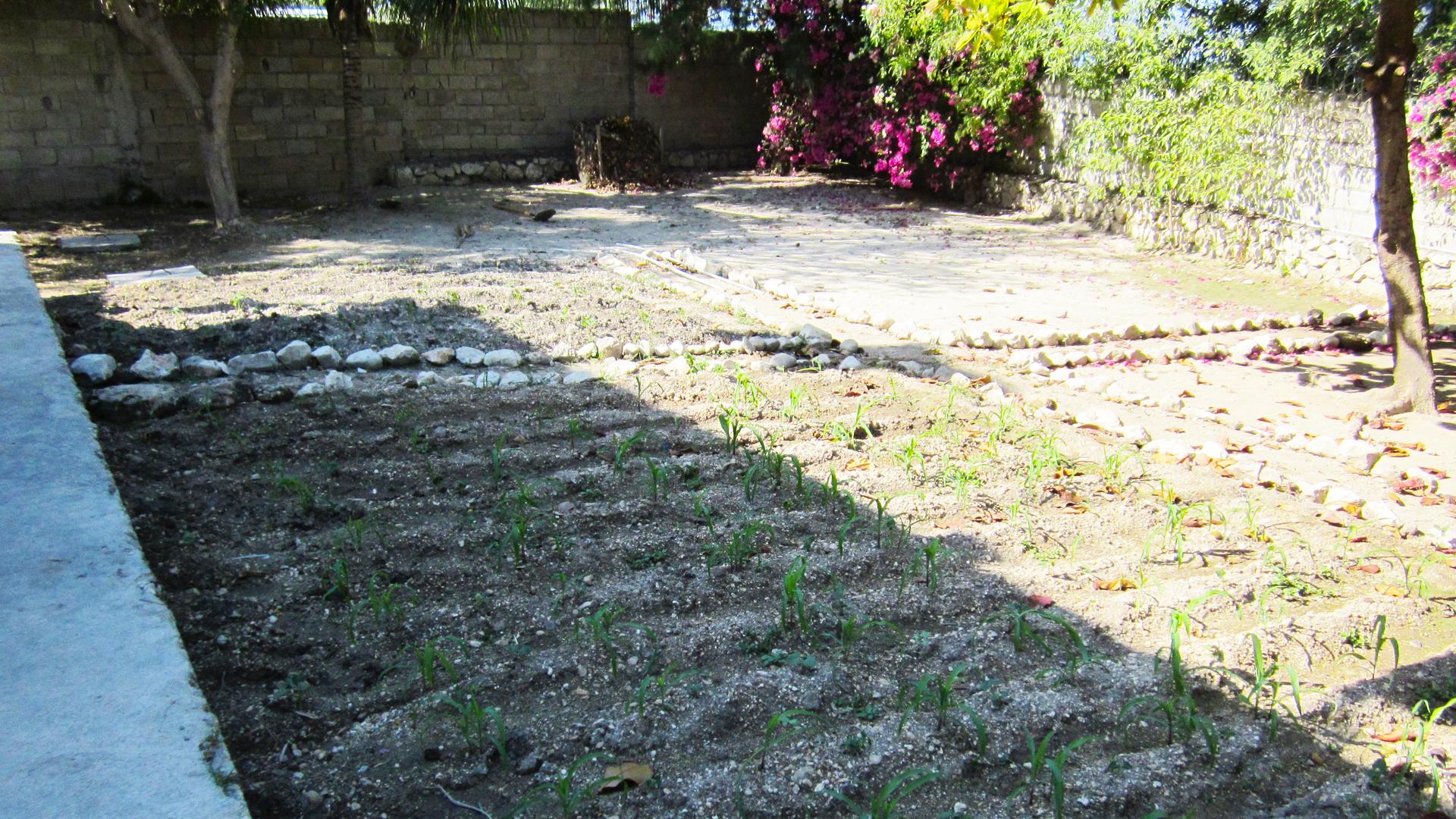 Haiti Garden
