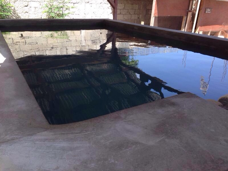 Tilapia Tank